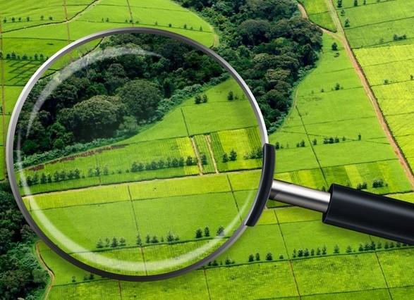 Погрешность в более 5 млн га: в Госгеокадастре рассказали, сколько земли в государственной собственности