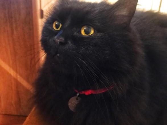 Кошку из музея Булгакова нашли мертвой возле памятника Мастеру