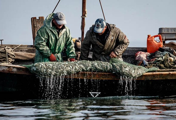 Вылов промышленными рыбаками в этом году превысил 24 тыс. тонн
