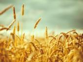 Державний аграрний реєстр функціонуватиме: закон набув чинності