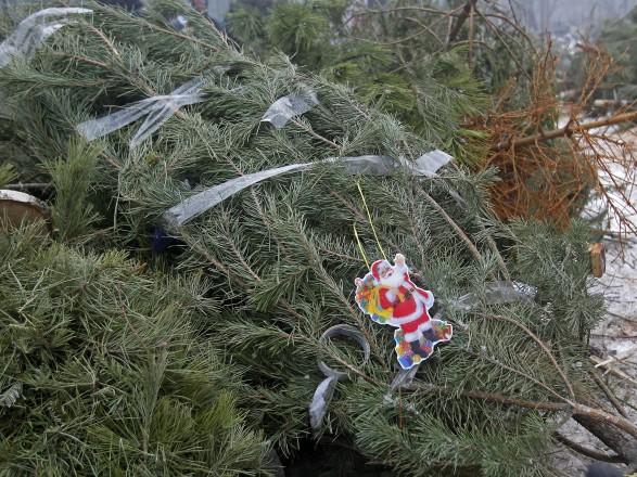В Киеве откроют 15 пунктов по утилизации новогодних елок