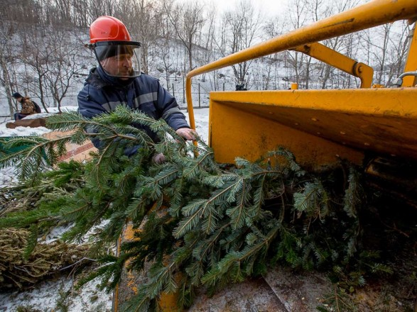 В Киеве с 1 января елки можно будет сдать на утилизацию