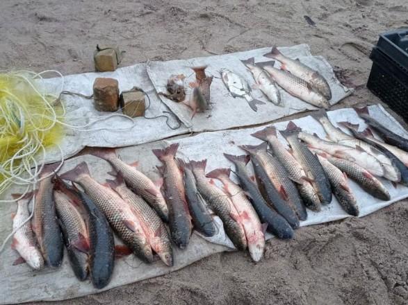 В Запорожской области браконьеры выловили краснокнижной рыбы на около 115 тыс. гривен