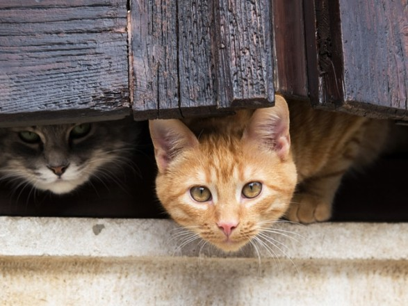 В прошлом году в столице более 750 бездомных собак и кошек нашли дом