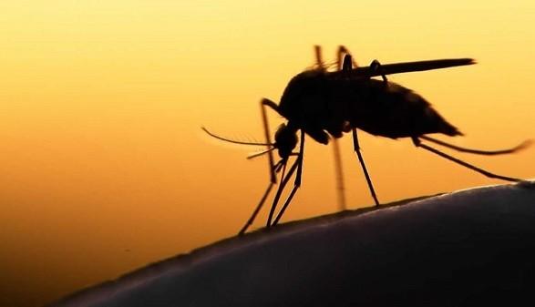 На Закарпатье обнаружили два случая малярии: заболел годовалый мальчик и его мама