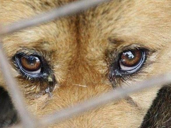 На Житомирщине живодер вылавливал соседских собак, чтобы съесть