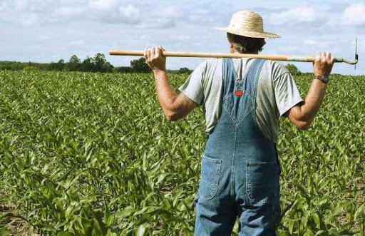 Фермеры рассказали, как бывший глава Аграрного фонда Иван Барышев их в кабалу вгонял