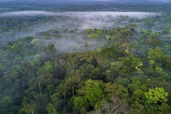 На Facebook незаконно продают участки тропических лесов Амазонии