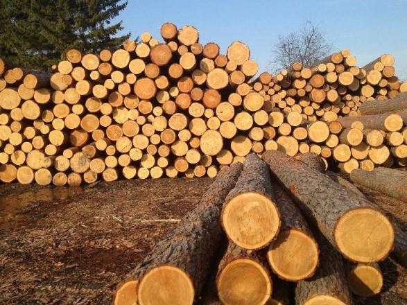 Древесина на экспорт: за два года с Карпат по схеме вывозили ель на миллионы гривен
