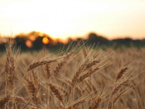 Аграрные и сельские реформы власти демонстрируют полную оторванность от людей – эксперт