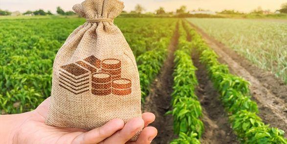 В 2021 году сельское хозяйство Украины восстановит растущую динамику - НААН
