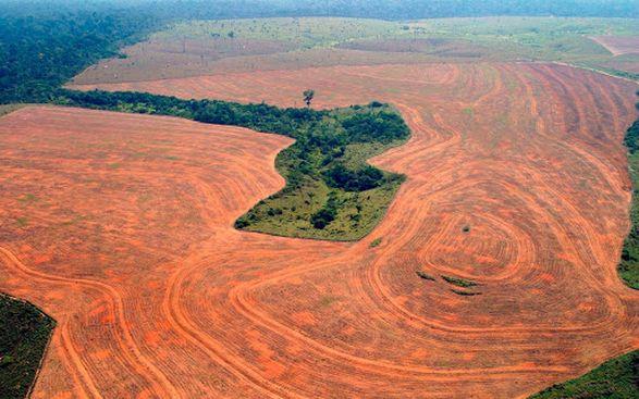 Бразилия резко сократила экологический бюджет на следующий день после Климатическое саммита