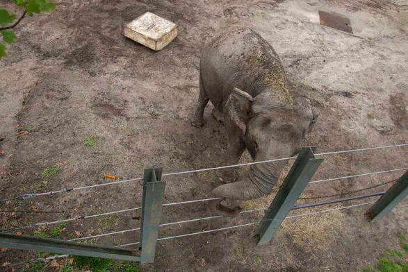 Освободите Хэппи: слониха судится с американским зоопарком из-за принудительного содержания в неволе