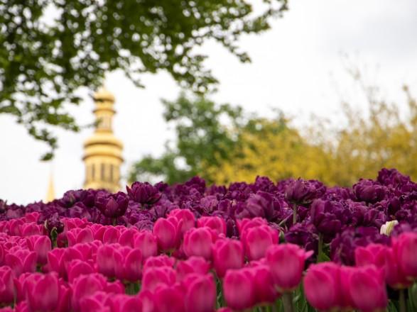Над композицией работали более 15 дизайнеров: на Певческом открыли выставку с более 700 тысяч тюльпанов