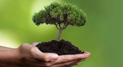 В Британии будут высаживать втрое больше деревьев для предотвращения климатической катастрофы