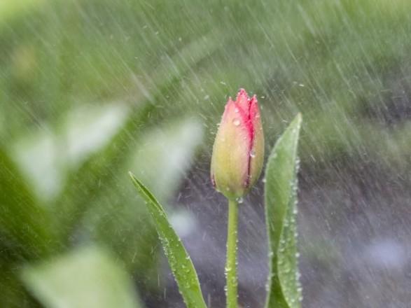 Украину накроют грозовые дожди: прогноз погоды на сегодня
