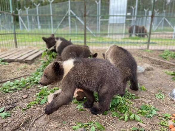 Из-за жестокого обращения со страусиной фермы под Киевом забрали медвежат и львят