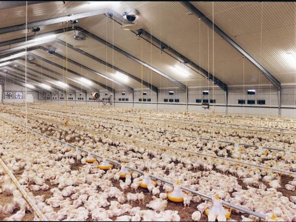 Не только птицеводству: налоги хотят увеличить малым и средним агропроизводителям