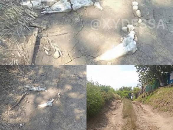 Человеческие останки обнаружились на размытой ливнем дороге в Одесской области