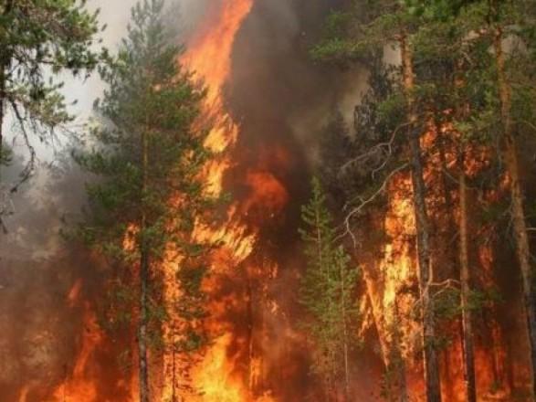 В США в пожарах уничтожено 400 гектаров леса