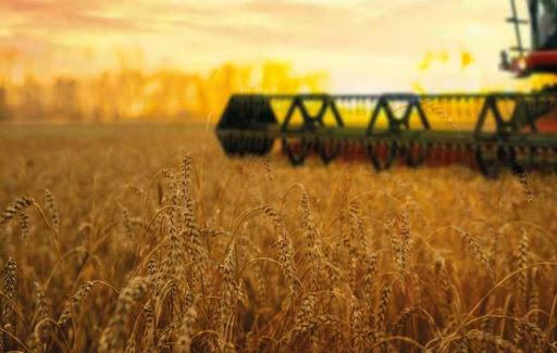 В 2021 году МХП планирует собрать урожай с 355 тыс. га земли