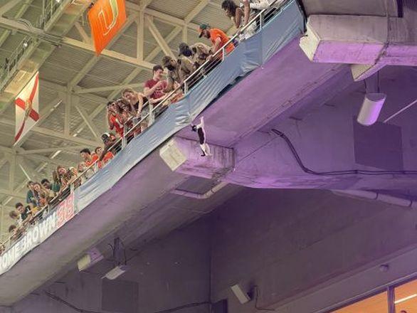 Фанаты на матче в Майами спасли кота, который сорвался с верхнего яруса стадиона