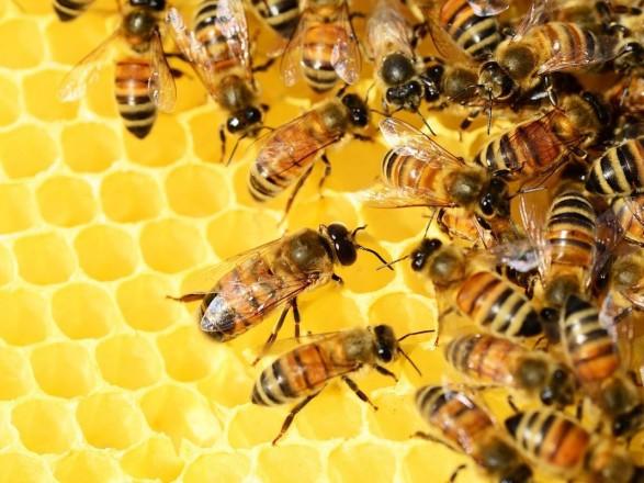 """Структурному подразделению """"Кернел"""" арестуют счета за гибель пчел"""
