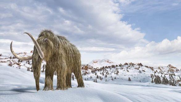 """Ученые хотят """"оживить"""" шерстистого мамонта: говорят, что они остановят глобальное потепление"""