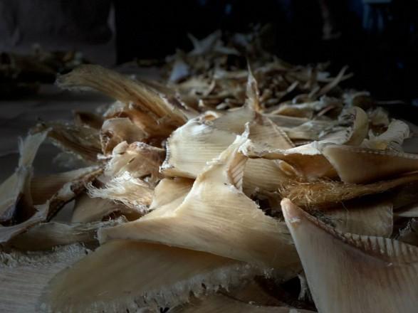 Колумбия конфисковала почти 3500 акульих плавников на пути в Гонконг