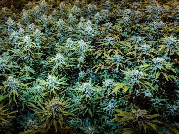 Активисты в Непале добиваются легализации марихуаны в бывшей гавани для хиппи