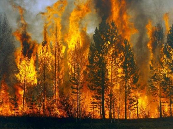 "Результат пошуку зображень за запитом ""лісова пожежа"""